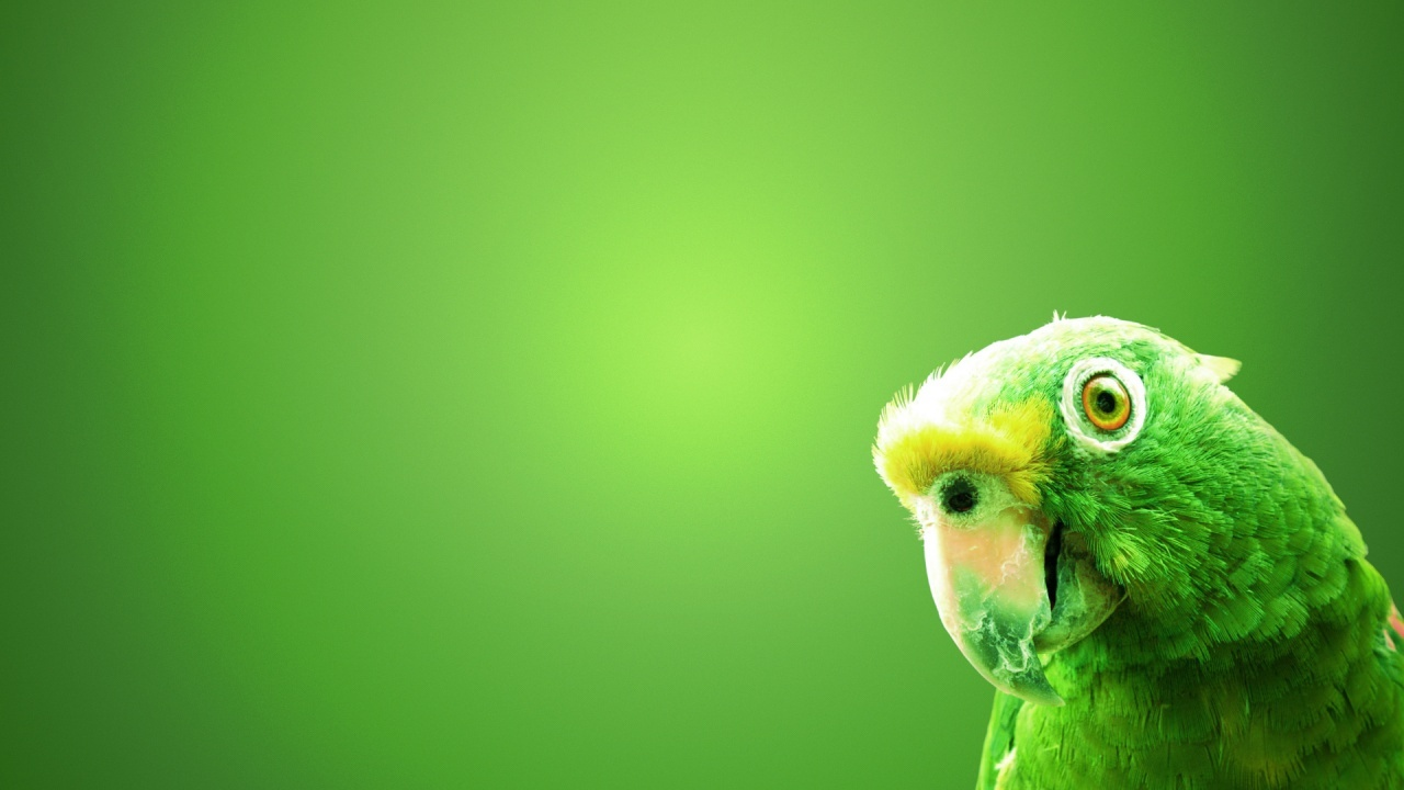 wallpapers hd, paisajes,animales,(random)